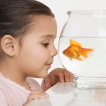 Young girl watching a fishbowl